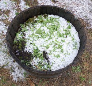Poppy Barrel with Hail